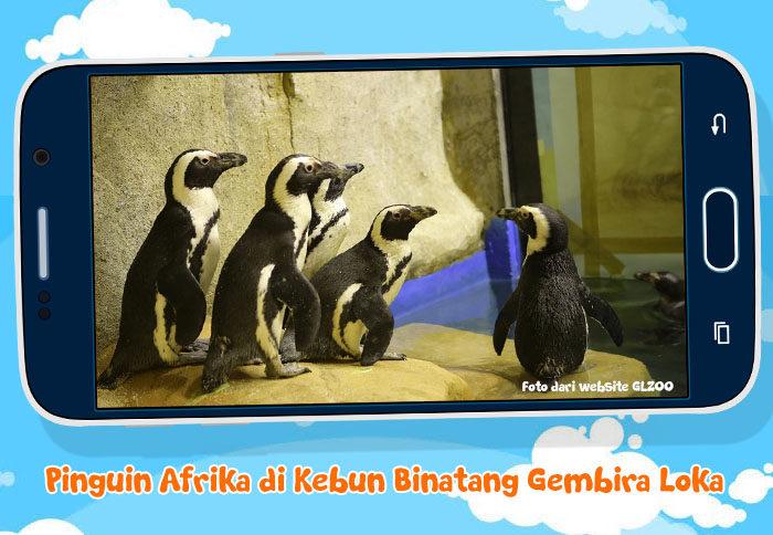 pinguin-afrika-glzoo